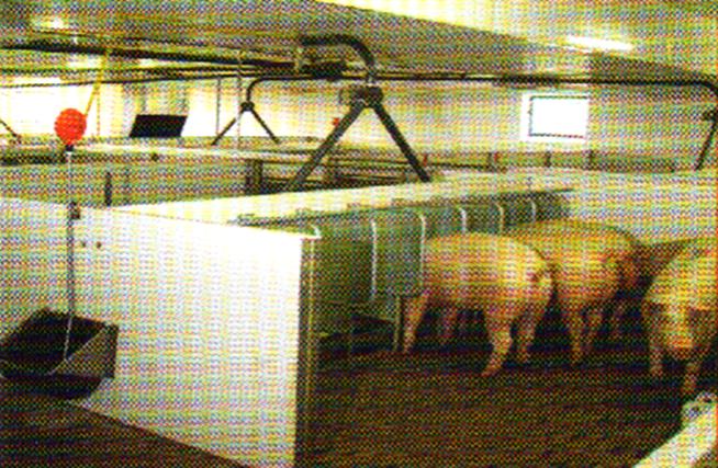 word image 568 Разработка инновационных технологий повышения продуктивности и качества продукции свиноводства