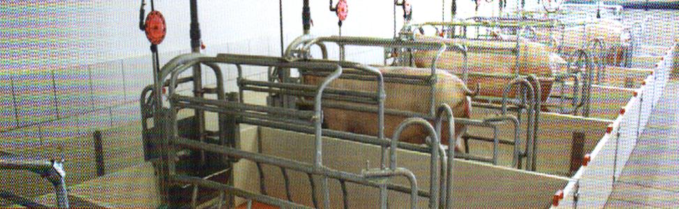 word image 569 Разработка инновационных технологий повышения продуктивности и качества продукции свиноводства
