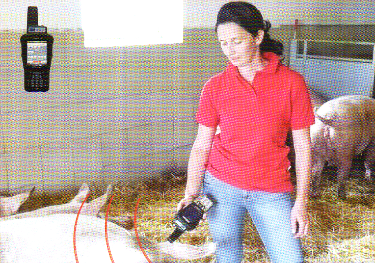 word image 571 Разработка инновационных технологий повышения продуктивности и качества продукции свиноводства