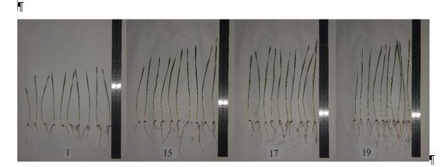 word image 91 Разработка препаратов биологического происхождения для защиты растений и оптимизации минерального питания в органическом земледелии
