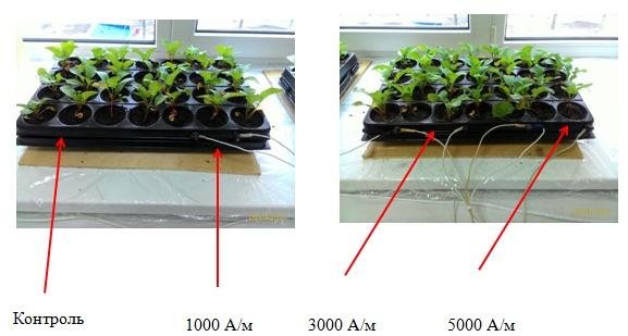 word image 105 Разработка комплекса энергосберегающих элементов технологии выращивания овощных культур в условиях высокотехнологичных культивационных сооружений