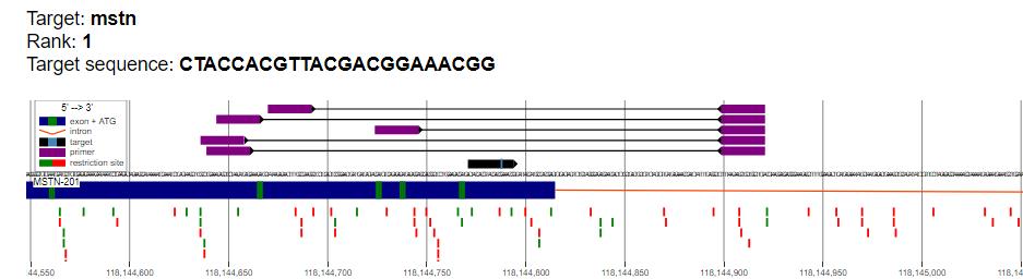 word image 1055 Использование методов редактирования генома CRISPR/CAS для повышения продуктивности сельскохозяйственных животных. II этап – разработка методики внесения генетических конструкций в геном сельскохозяйственных животных