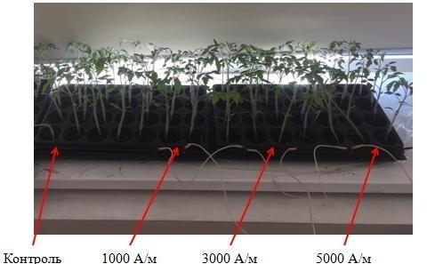 word image 106 Разработка комплекса энергосберегающих элементов технологии выращивания овощных культур в условиях высокотехнологичных культивационных сооружений