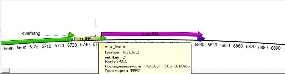 word image 1060 Использование методов редактирования генома CRISPR/CAS для повышения продуктивности сельскохозяйственных животных. II этап – разработка методики внесения генетических конструкций в геном сельскохозяйственных животных