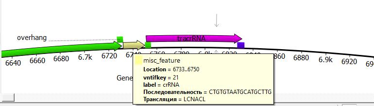 word image 1062 Использование методов редактирования генома CRISPR/CAS для повышения продуктивности сельскохозяйственных животных. II этап – разработка методики внесения генетических конструкций в геном сельскохозяйственных животных