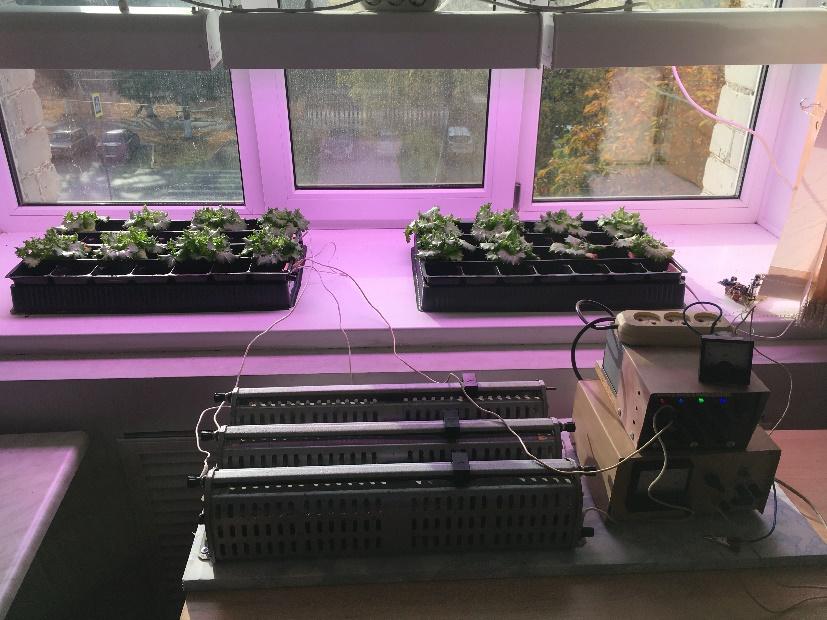 word image 110 Разработка комплекса энергосберегающих элементов технологии выращивания овощных культур в условиях высокотехнологичных культивационных сооружений