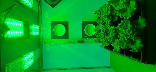 word image 116 Разработка комплекса энергосберегающих элементов технологии выращивания овощных культур в условиях высокотехнологичных культивационных сооружений