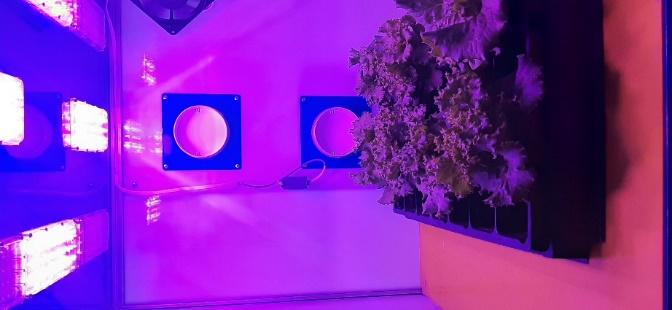 word image 119 Разработка комплекса энергосберегающих элементов технологии выращивания овощных культур в условиях высокотехнологичных культивационных сооружений