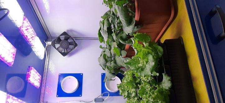 word image 120 Разработка комплекса энергосберегающих элементов технологии выращивания овощных культур в условиях высокотехнологичных культивационных сооружений
