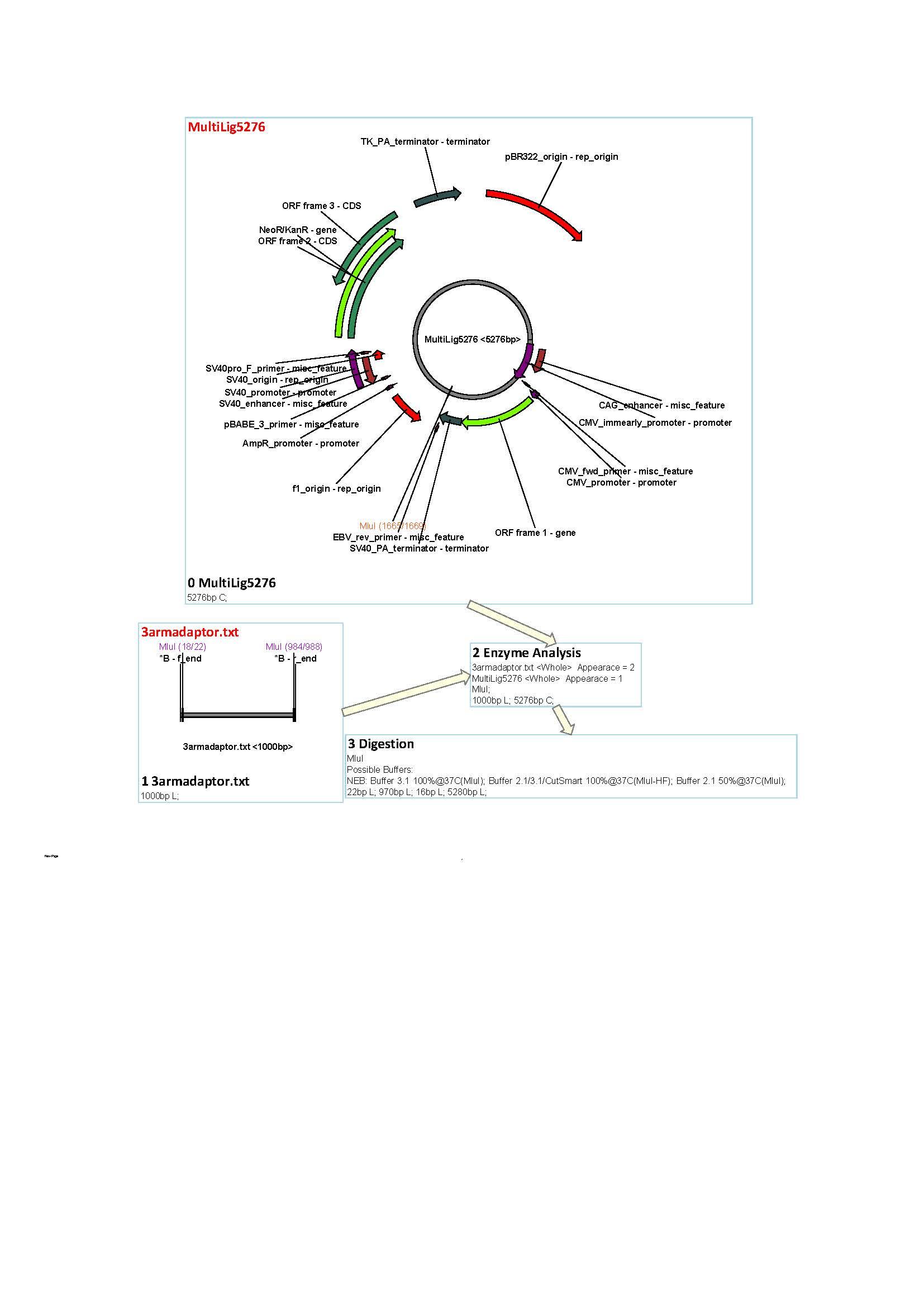 word image 183 Использование методов редактирования генома CRISPR/CAS для повышения продуктивности сельскохозяйственных животных. II этап – разработка методики внесения генетических конструкций в геном сельскохозяйственных животных