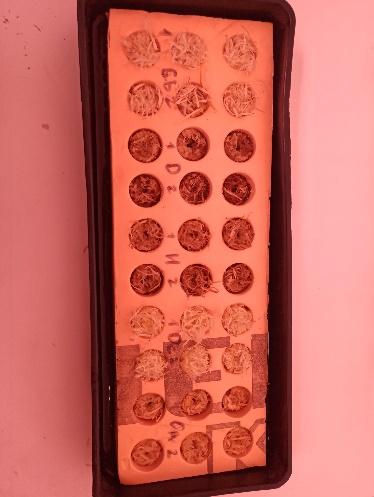 word image 51 Совершенствование технологии производства зеленных культур на рассадно-салатных комплексах зимних теплиц за счет применения почвогрунта на основе древесного волокна и автоматизации технологических процессов