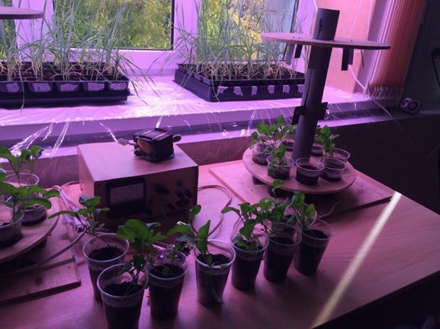 word image 654 Разработка комплекса энергосберегающих элементов технологии выращивания овощных культур в условиях высокотехнологичных культивационных сооружений