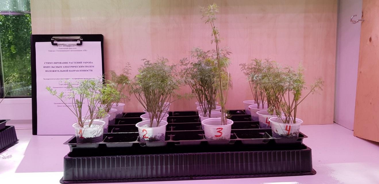 word image 99 Разработка комплекса энергосберегающих элементов технологии выращивания овощных культур в условиях высокотехнологичных культивационных сооружений