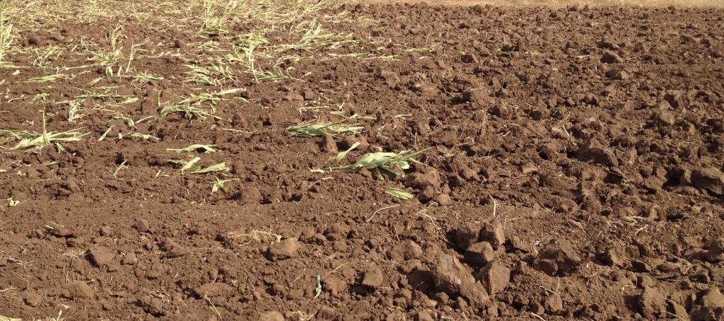 Изображение выглядит как внешний, трава, стоит, поле Автоматически созданное описание