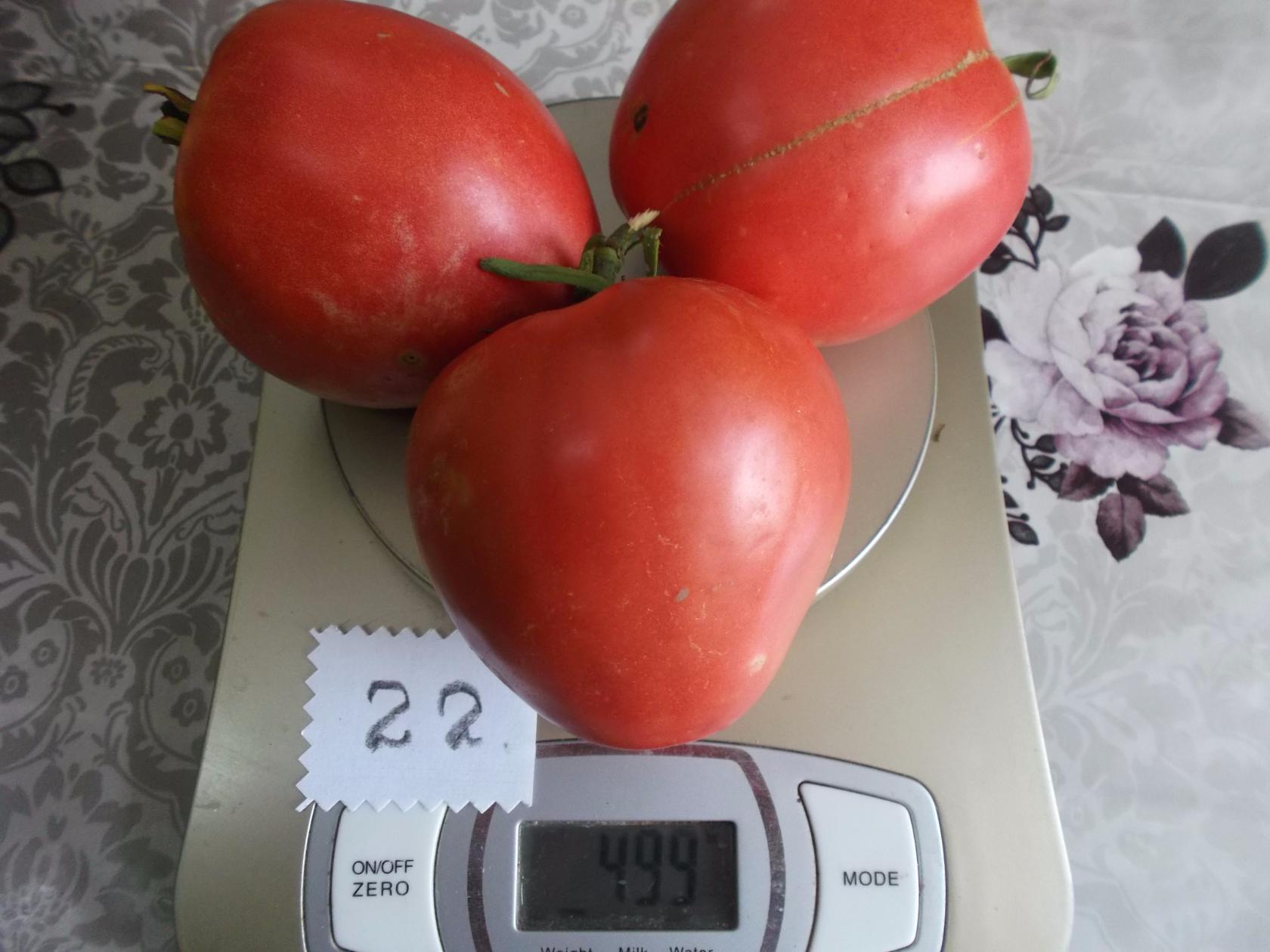 Лучшие сорта томатов прошлого года: рейтинг, отзывы, фото