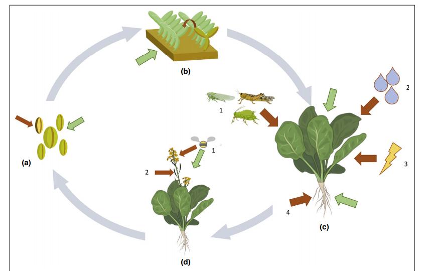 word image 1195 Разработка бактериофагового биопрепарата для биоконтроля Pseudomonas syringae в растениеводстве