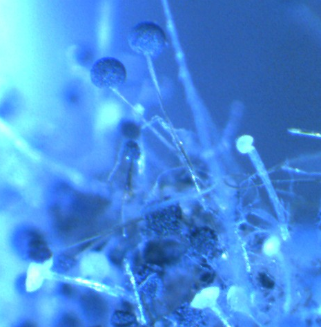 word image 404 Разработка биопрепарата для защиты сои от грибных болезней в условиях Сибири