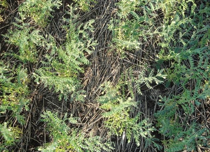 word image 53 Исследования и разработки эффективных севооборотов для технологии прямого посева для разных почвенно-климатических условий