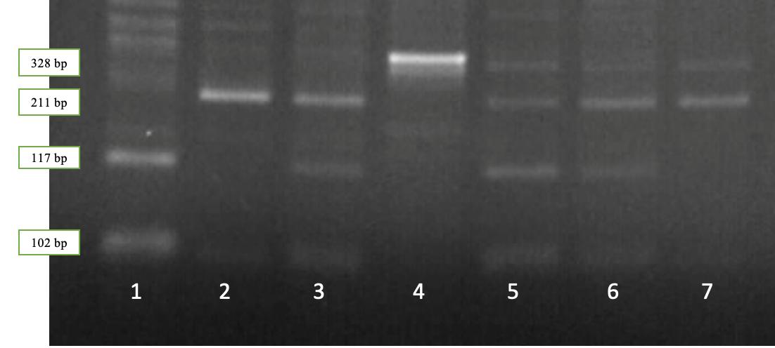 word image 531 Исследование генетического разнообразия в высокопродуктивных стадах крупного рогатого скота по полиморфным вариантам генов, ассоциированных с хозяйственно полезными признаками.
