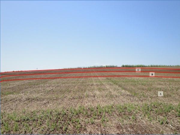 word image 54 Исследования и разработки эффективных севооборотов для технологии прямого посева для разных почвенно-климатических условий