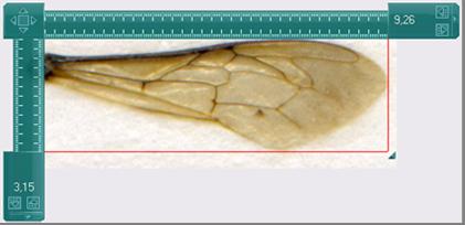 word image 597 Совершенствование и внедрение новых технологий производства неплодных и плодных маток медоносных пчёл среднерусской породы в условиях Пермского края