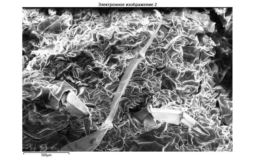 word image 688 Оценка влияния пространственного варьирования свойств почвы на продукционный процесс и качество продукции в севообороте хозяйства, аккредитованного по международным стандартам «Органик»