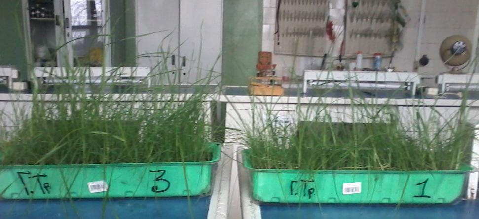 word image 722 Разработка препаратов биологического происхождения для защиты растений и оптимизации минерального питания в органическом земледелии