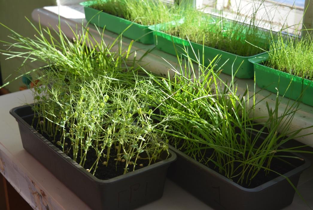 word image 81 Разработка препаратов биологического происхождения для защиты растений и оптимизации минерального питания в органическом земледелии